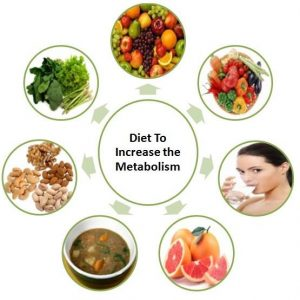 metabolism-process